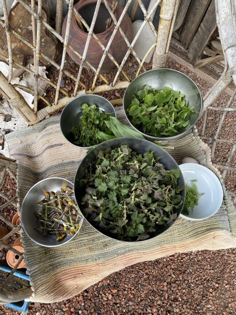 plantes sauvages à cuisiner