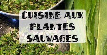 cuisine aux plantes sauvages