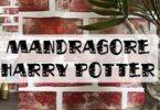 tuto mandragore harry potter