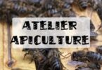 atelier apiculture montreuil