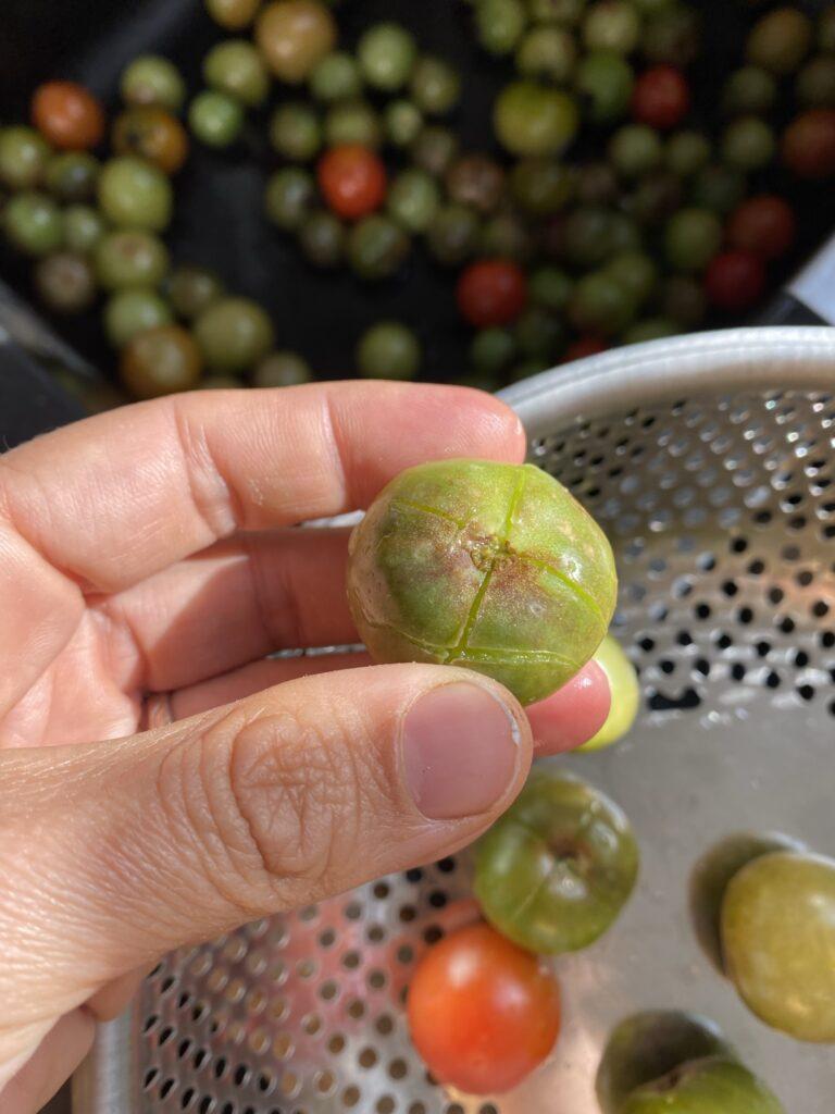 que faire de ses tomates vertes