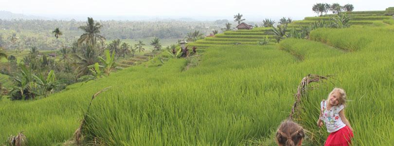 Voyage à Bali – Temple de Batukaru et rizière de Jatiluwih #5