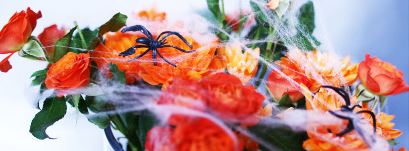 Préparatifs et fête d'Halloween